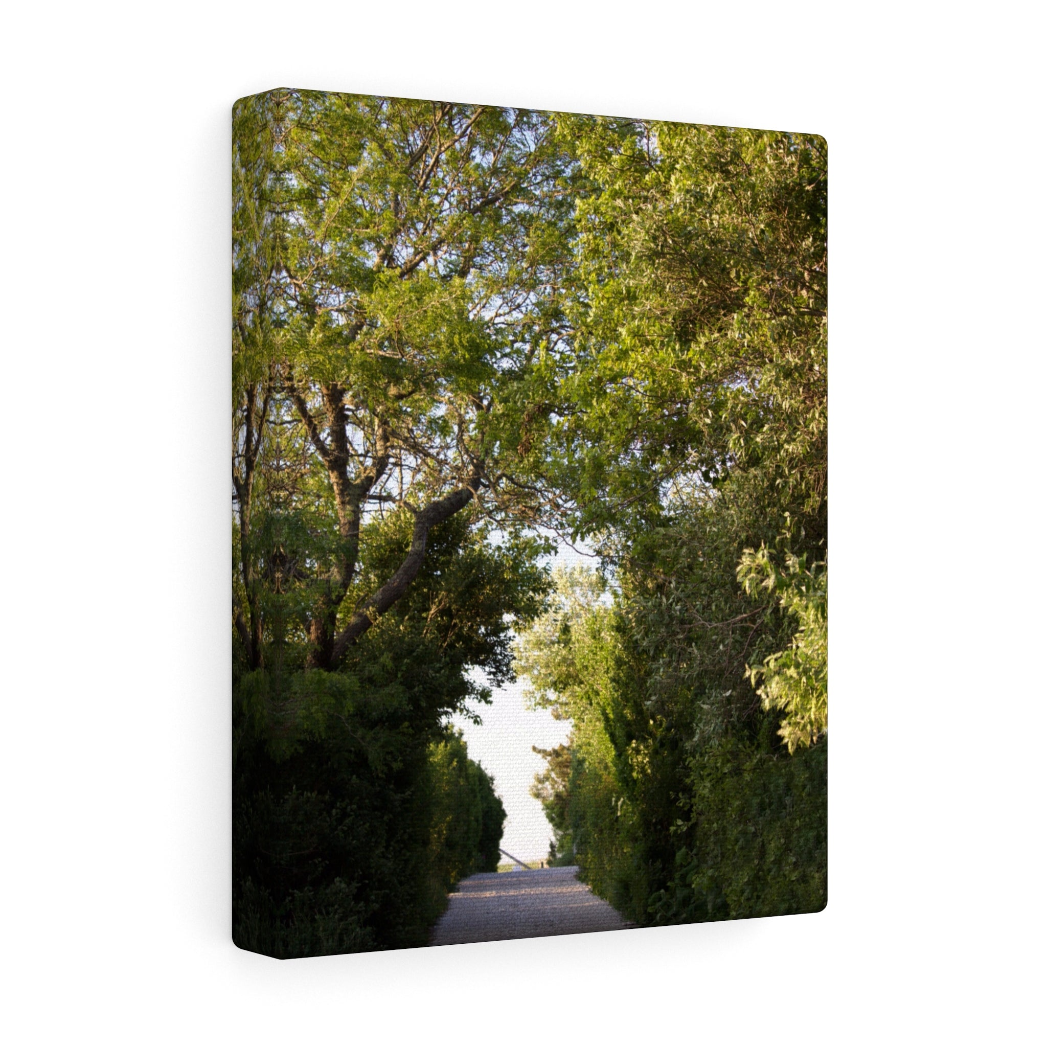 The Secluded Beach Path Canvas Gallery Wrap