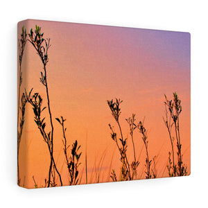 Reaching For The Sky Canvas Gallery Wrap