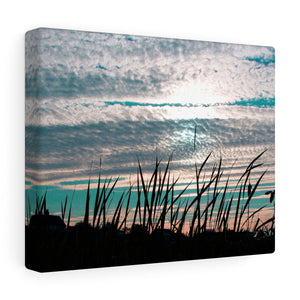 Seagrass Silhouette Canvas Gallery Wrap