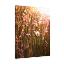 Nantucket Wild Flowers II Canvas Gallery Wrap