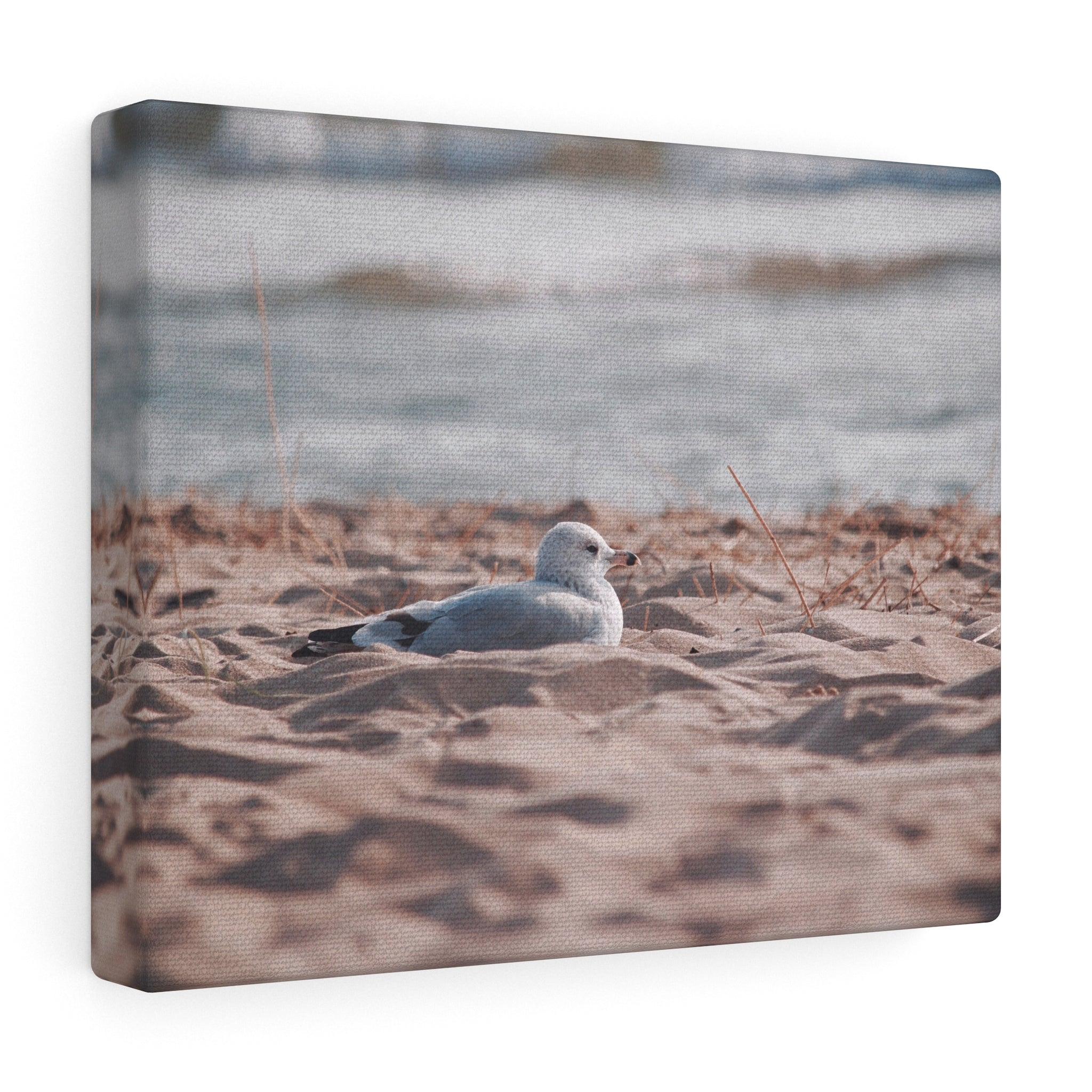 Seagull in Solitude Canvas Gallery Wrap