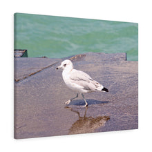 The Strutting Seagull Canvas Gallery Wrap