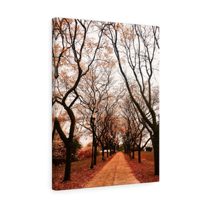 Tree Trail Canvas Gallery Wrap