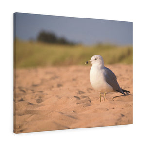 The Seagull Stare Canvas Gallery Wrap