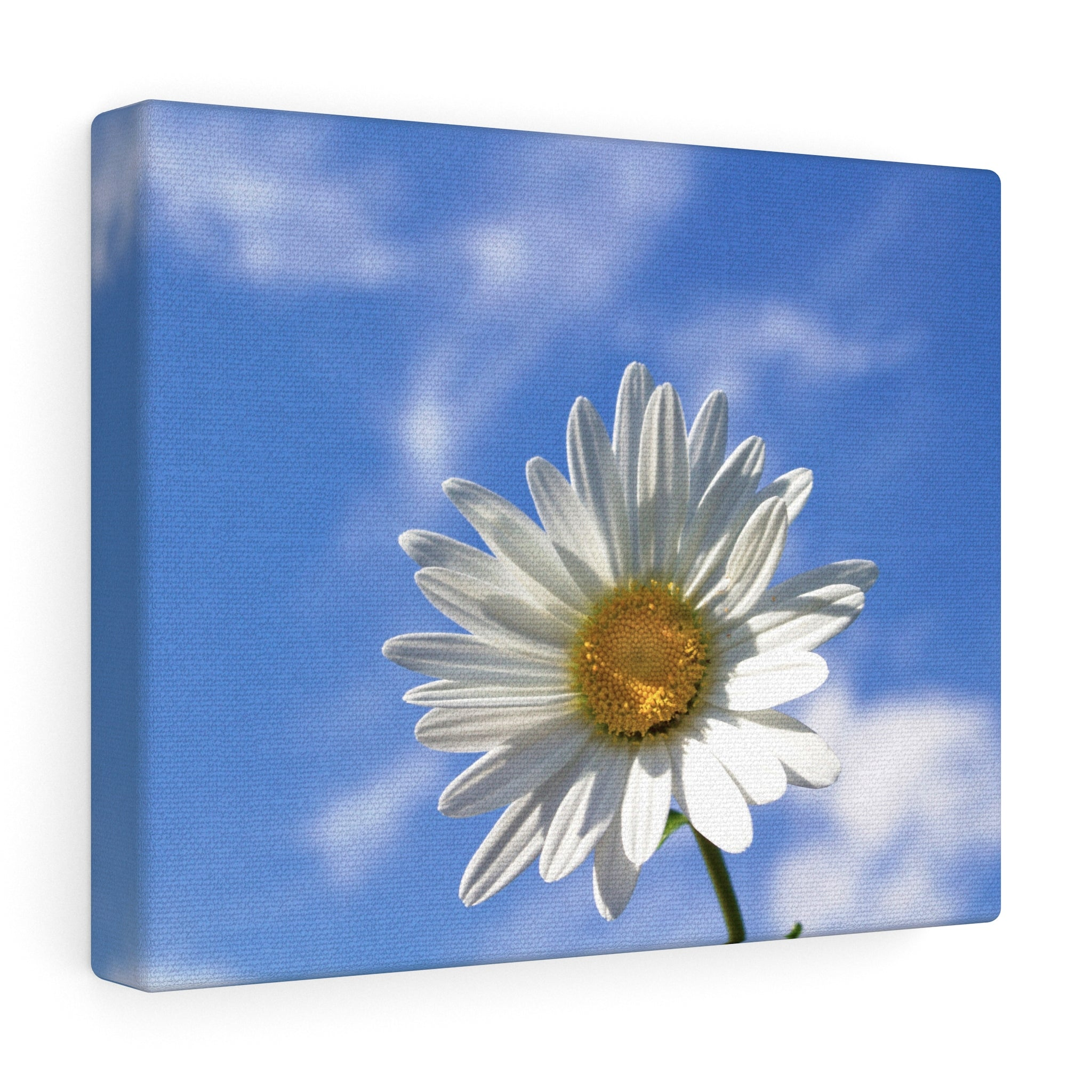 Happy as a Daisy Canvas Gallery Wrap