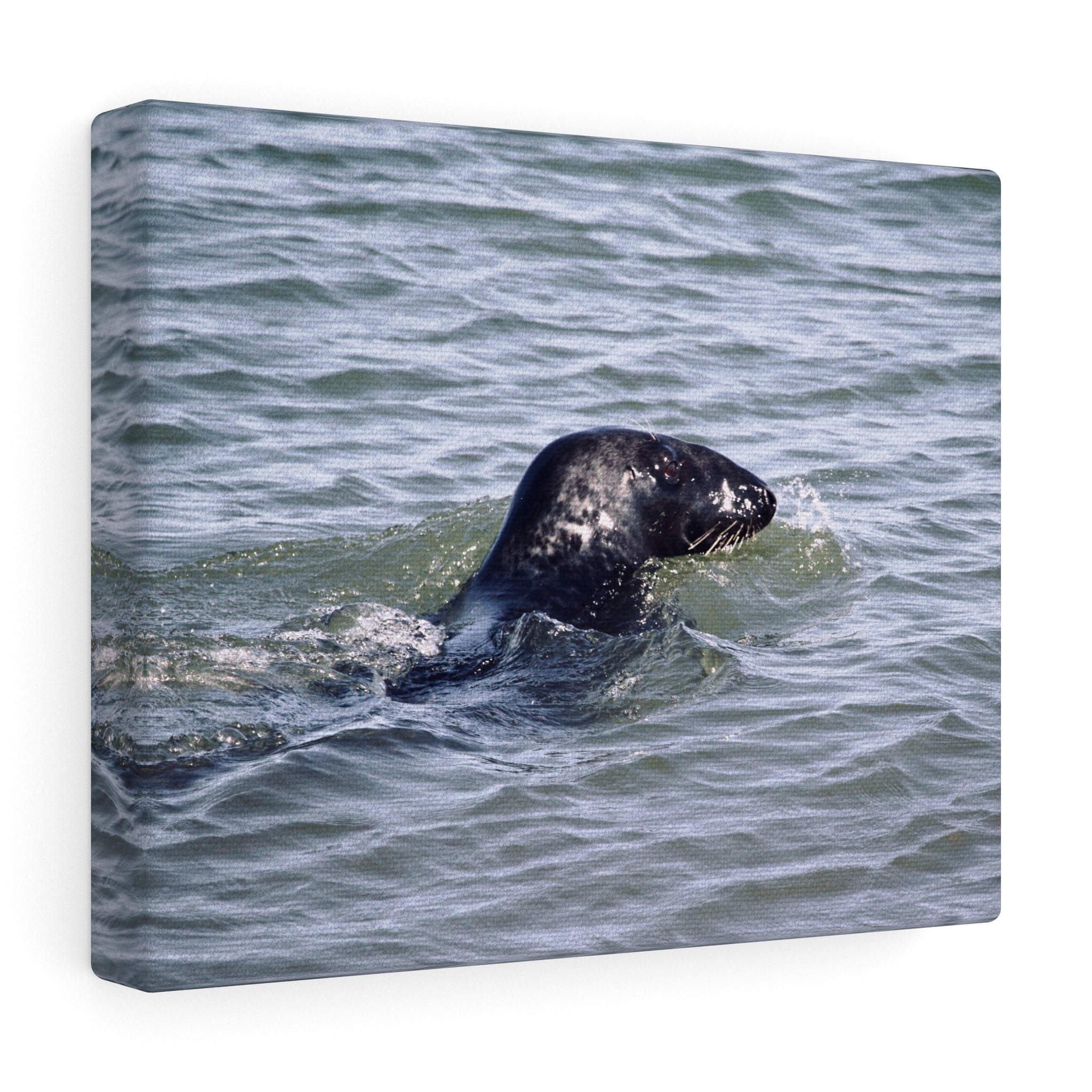 The Seal Canvas Gallery Wrap
