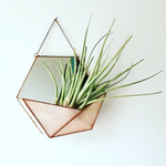 Hexagon Mirror/Terrarium