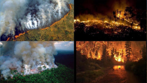 Burning Amazon Rainforest - From Belo