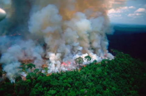 Amazon rainforest on Fire - From Belo