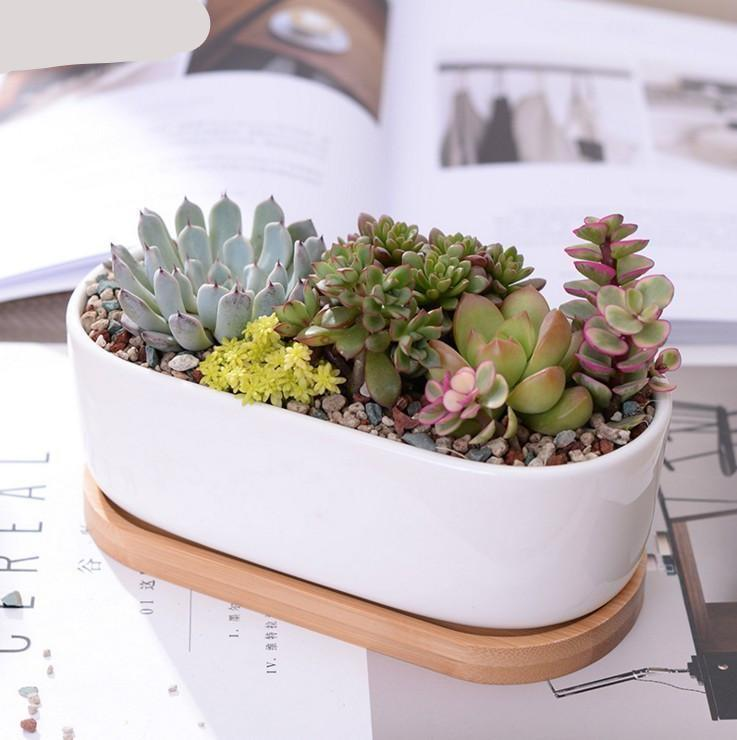 White Ceramic Succulent  Planter Set