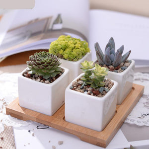 White Ceramic Succulent Planter Set with Bamboo Stand