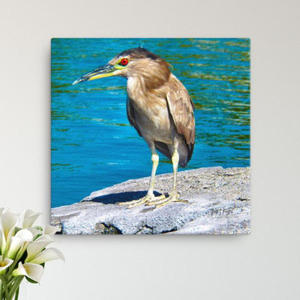 Hawai'ian Night Heron 'Auku'u at Mauna Lani Full Size Photo Canvas Giclée Size: 12x12 wrap print - Shella Island Products,, Canvas Prints - Yoga Leggings, Shella Island Products - Asana Hawaii
