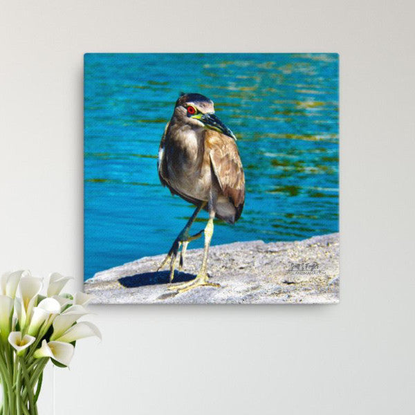 Hawai'ian Night Heron 'Auku'u (Image 2) Photo Giclée Canvas Print- Size: 12x12 (Full Size)