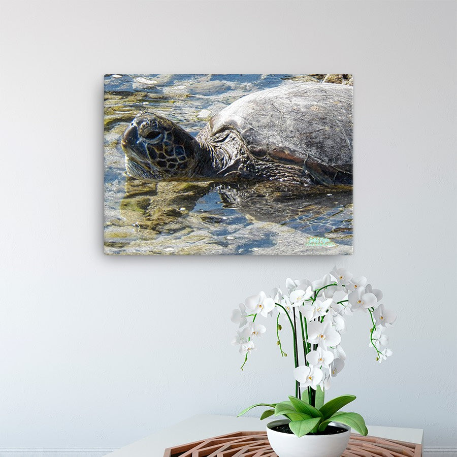 Honu Hawaiian Sea Turtle Giclée Canvas Photo Print- Sizes: 12x16 full and 12x16 wrap - Shella Island Products,, Canvas Prints - Yoga Leggings, Shella Island Products - Asana Hawaii