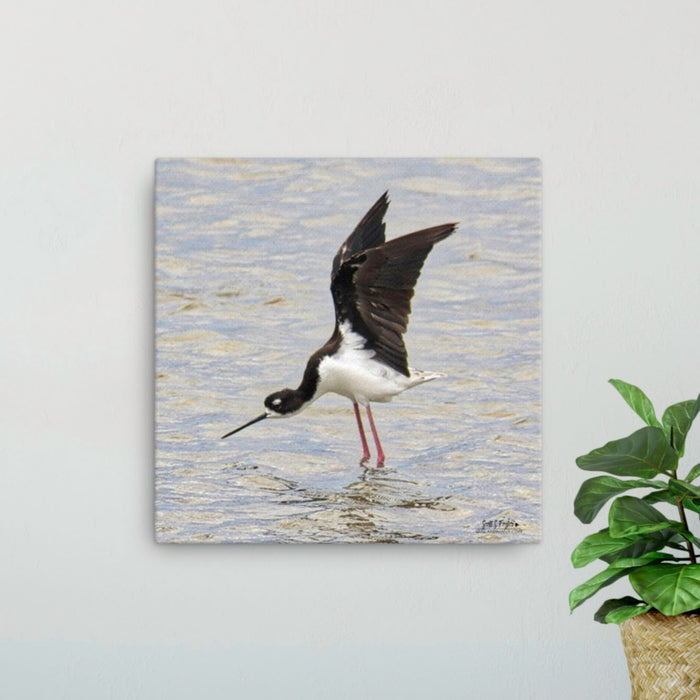 Hawai'ian Stilt at Kaloko Fishponds Giclée Canvas Photo Print Size: (12x12 wrap style)