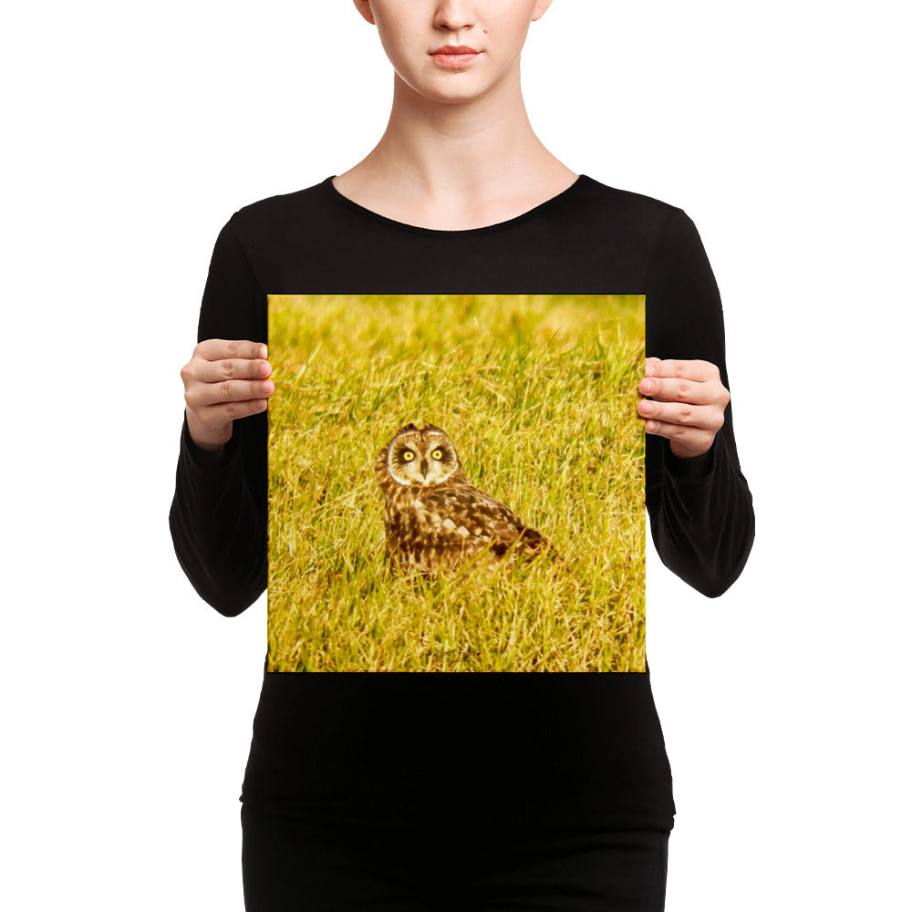 Pueo Hawai'ian Owl in the Waimea Ranch Lands Photo Giclée Canvas Print- Size: 12x12 - Shella Island Products,, Canvas Prints - Yoga Leggings, Shella Island Products - Asana Hawaii