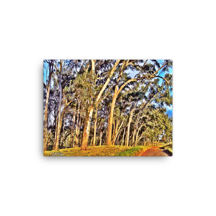 Mana Road Photo Giclée Canvas Print- Size: 12x16 (Wrap Size)
