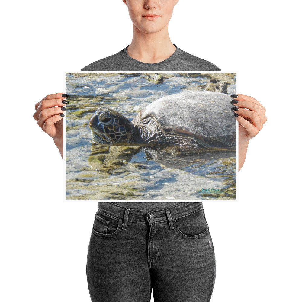 Honu Turtle on Puako Beach Glossy Photo Paper Print - Size: 12x16 in. - Shella Island Products,,  - Yoga Leggings, Shella Island Products - Asana Hawaii