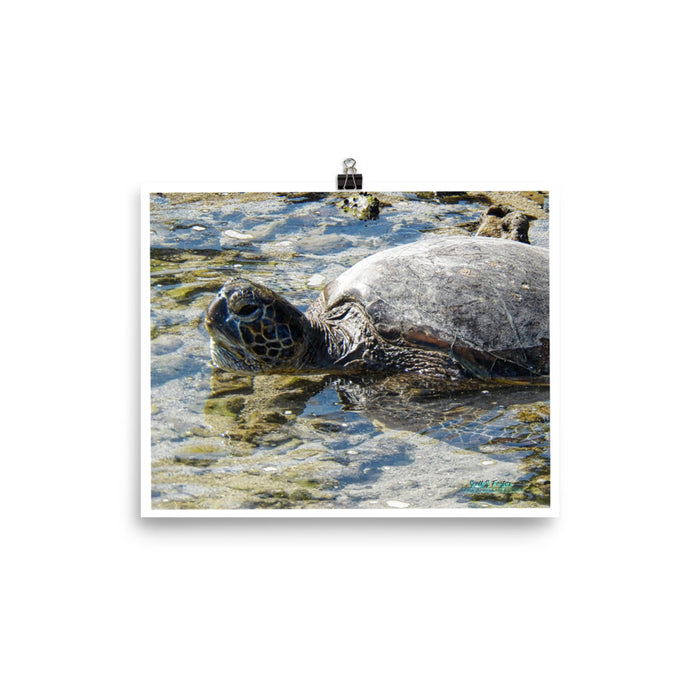 HONU TURTLE IN PUAKO - GLOSSY PHOTO PAPER -  SIZE: 8x10 in - Shella Island Products,, Photo Print - Yoga Leggings, Shella Island Products - Asana Hawaii