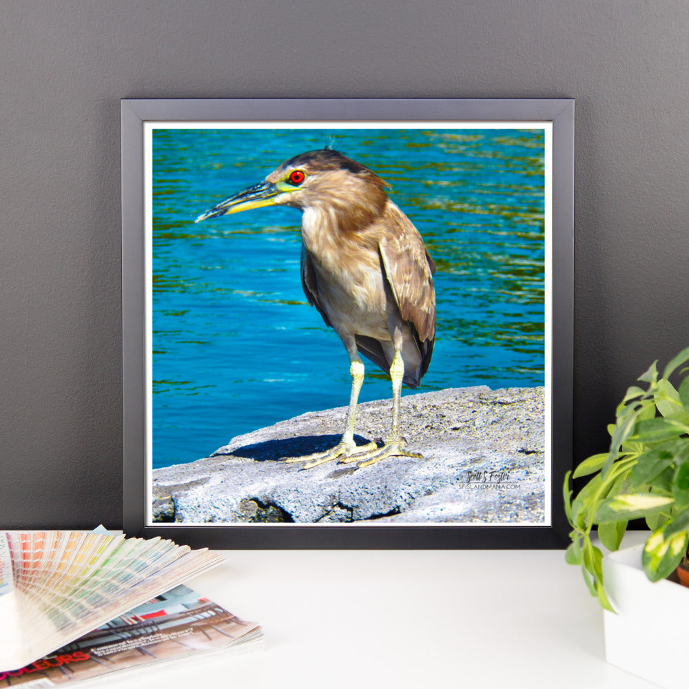Hawai'ian Night Heron 'Auku'u Framed Glossy Photo Paper