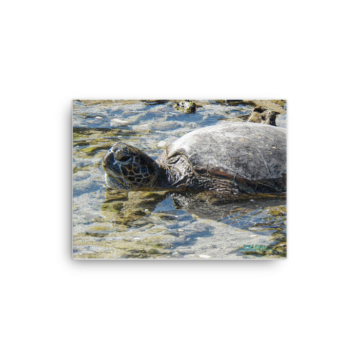 Honu Hawaiian Sea Turtle Giclée Canvas Photo Print- Sizes: 12x16 full and 12x16 wrap