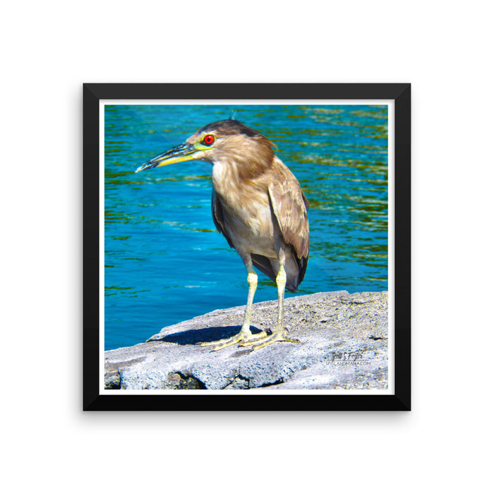 Hawai'ian Night Heron 'Auku'u Framed Glossy Photo Paper - Shella Island Products,, Photo Print - Yoga Leggings, Shella Island Products - Asana Hawaii