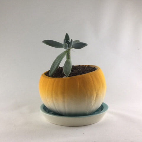 Short Pumpkin Planter