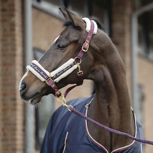 Head collar -Morello-