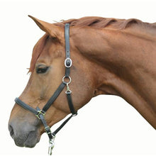 Leather head collar -Classy-, soft lined