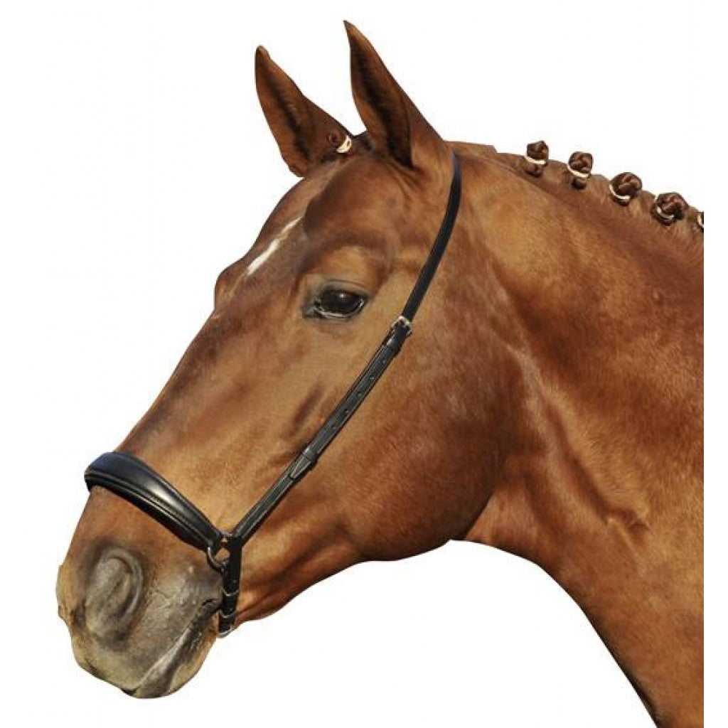 Dropped noseband -Hannover-