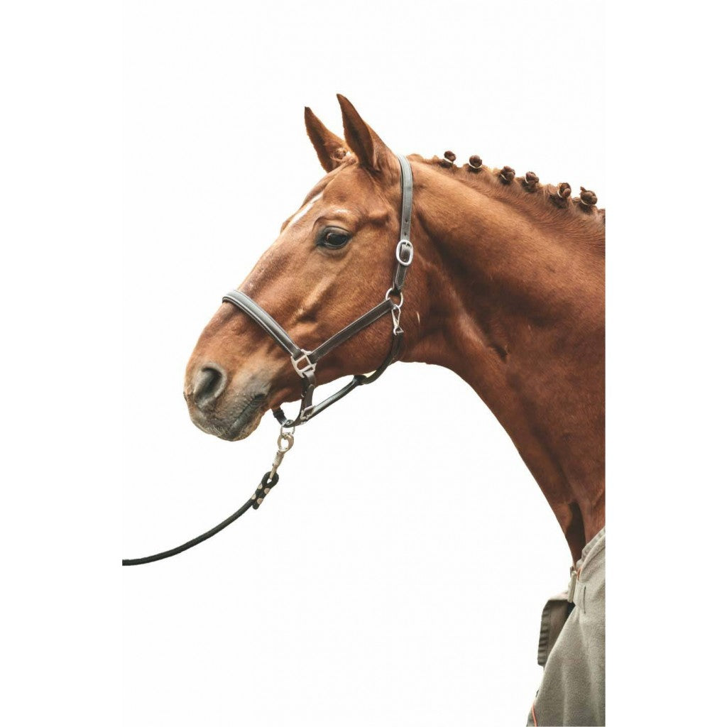 Leather head collar -Simple-