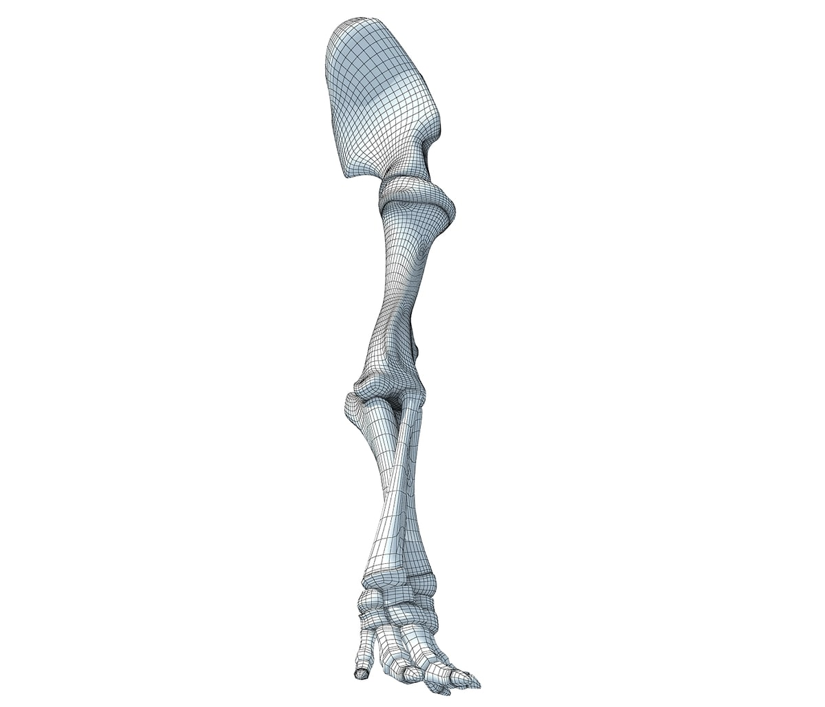 Elephant Leg Skeleton