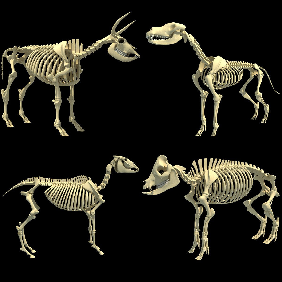 3D Animal Skeletons Models