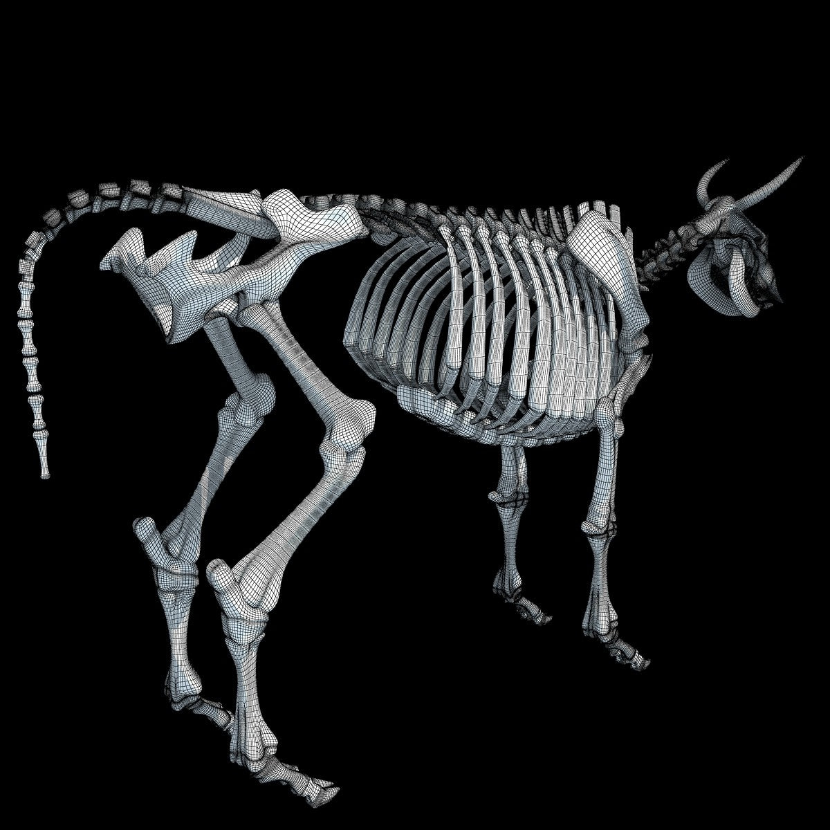 Cow Skeleton 3D Model