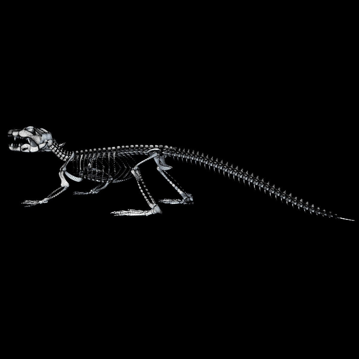 Crocodile Skeleton 3D Model