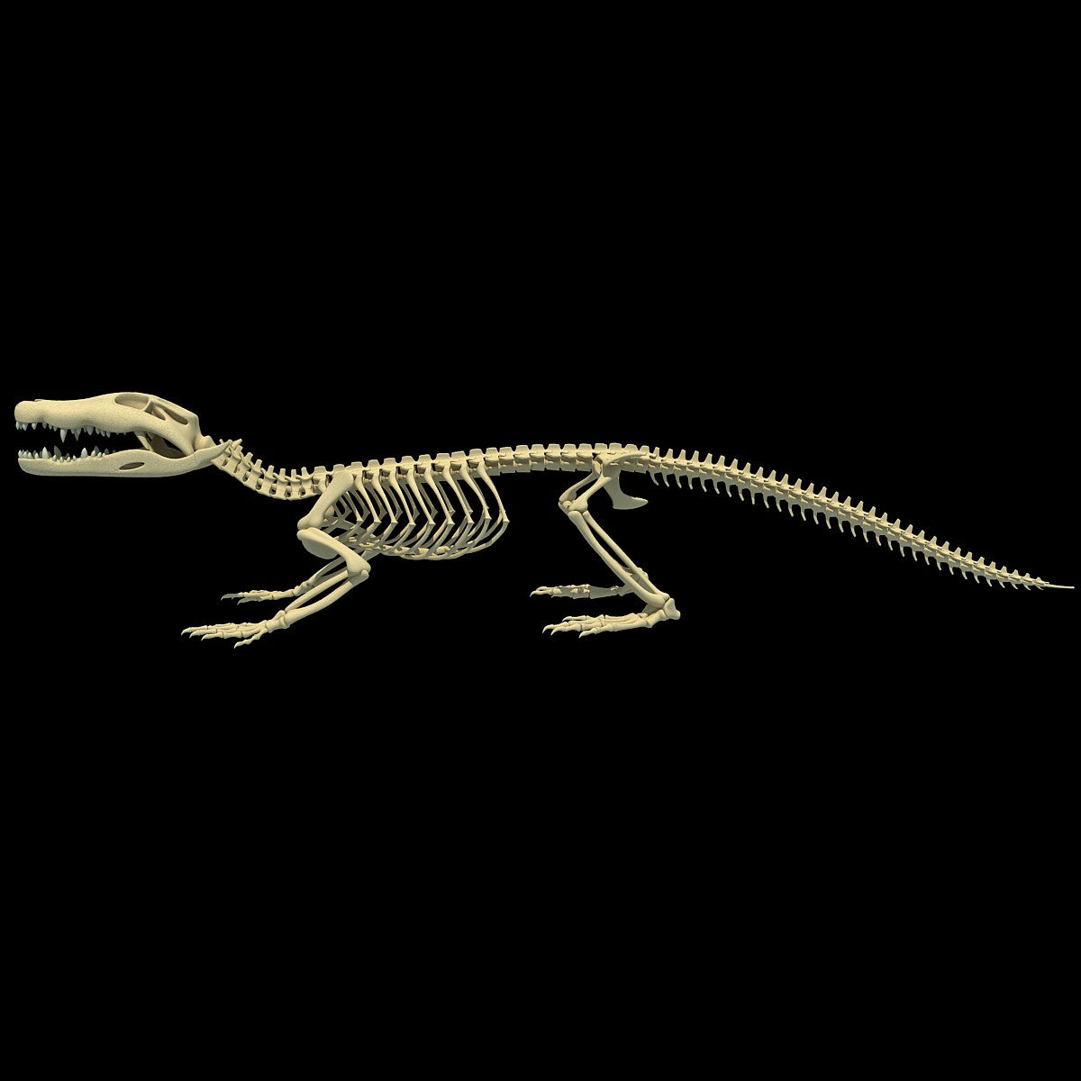 Crocodile Skeleton