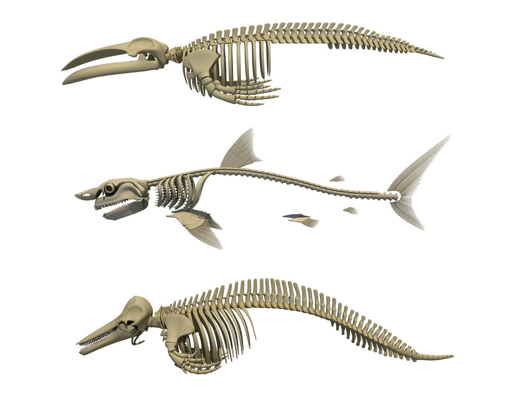 Aquatic Skeleton Collection