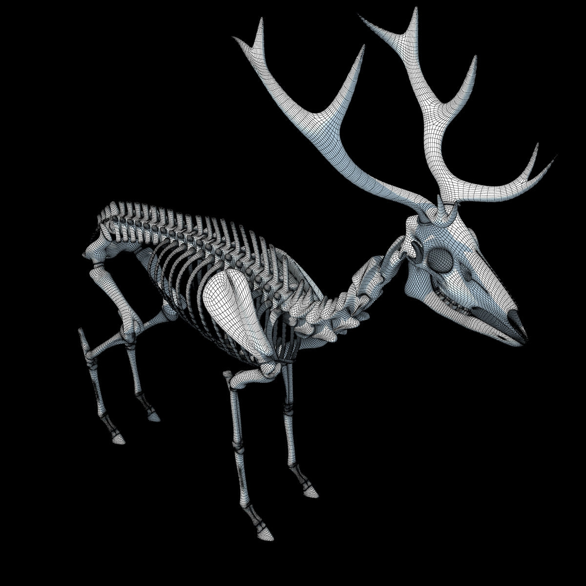 Deer Skeleton 3D Model