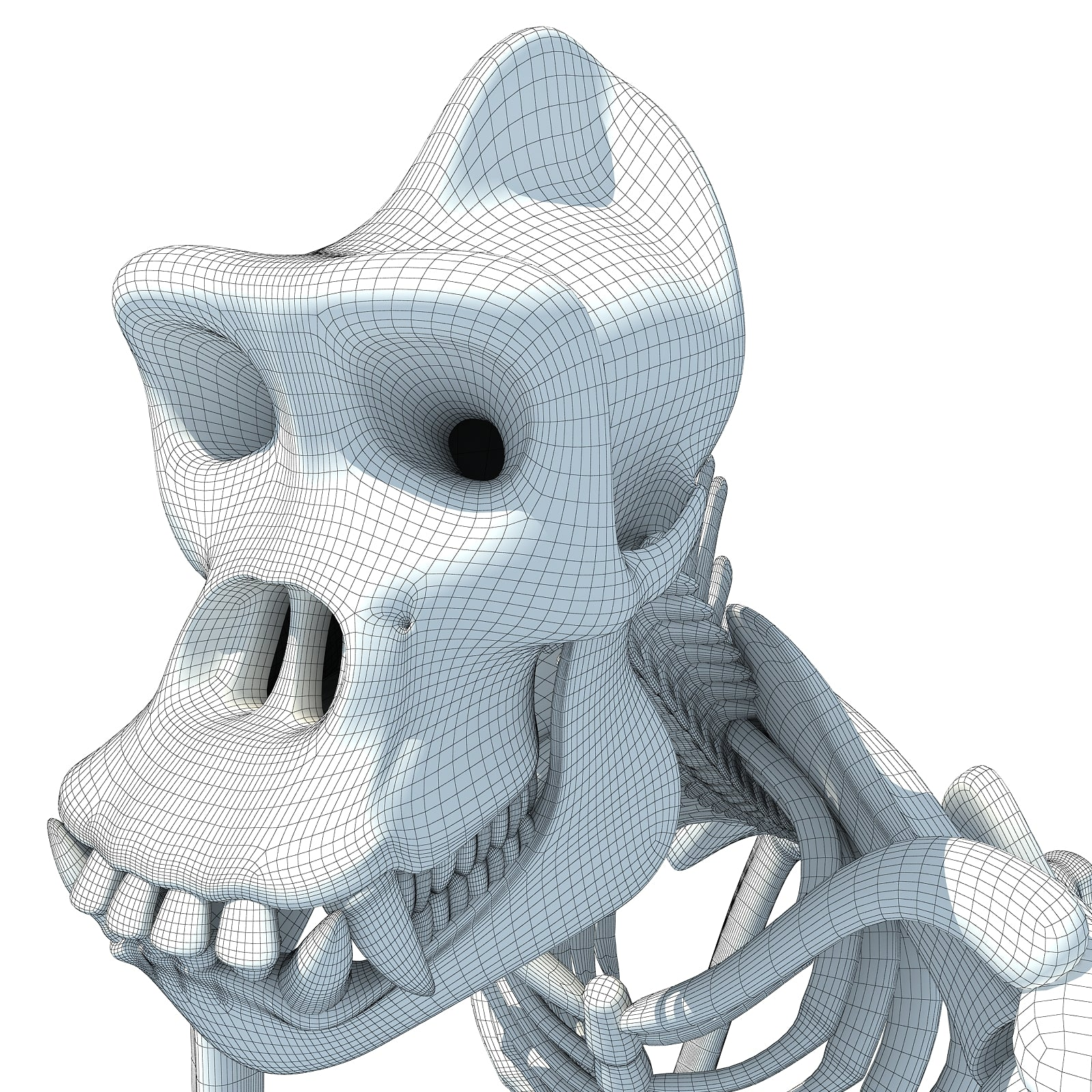 Gorilla Skeleton 3D Model