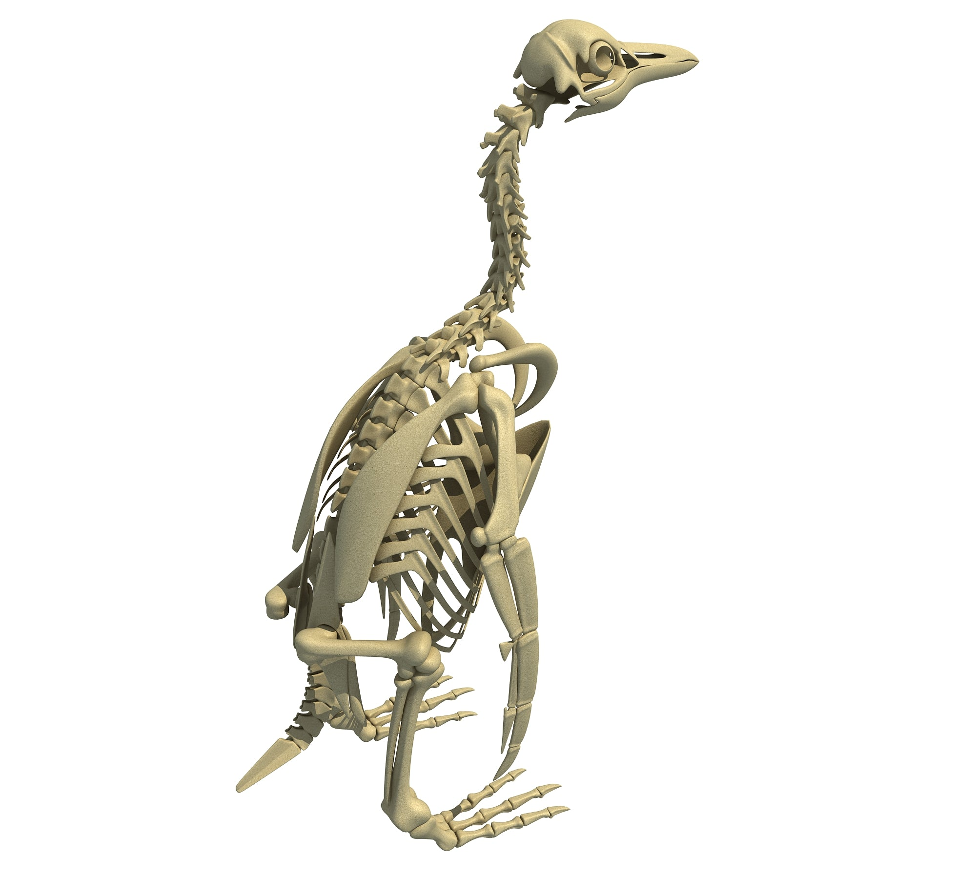 Penguin Skeleton