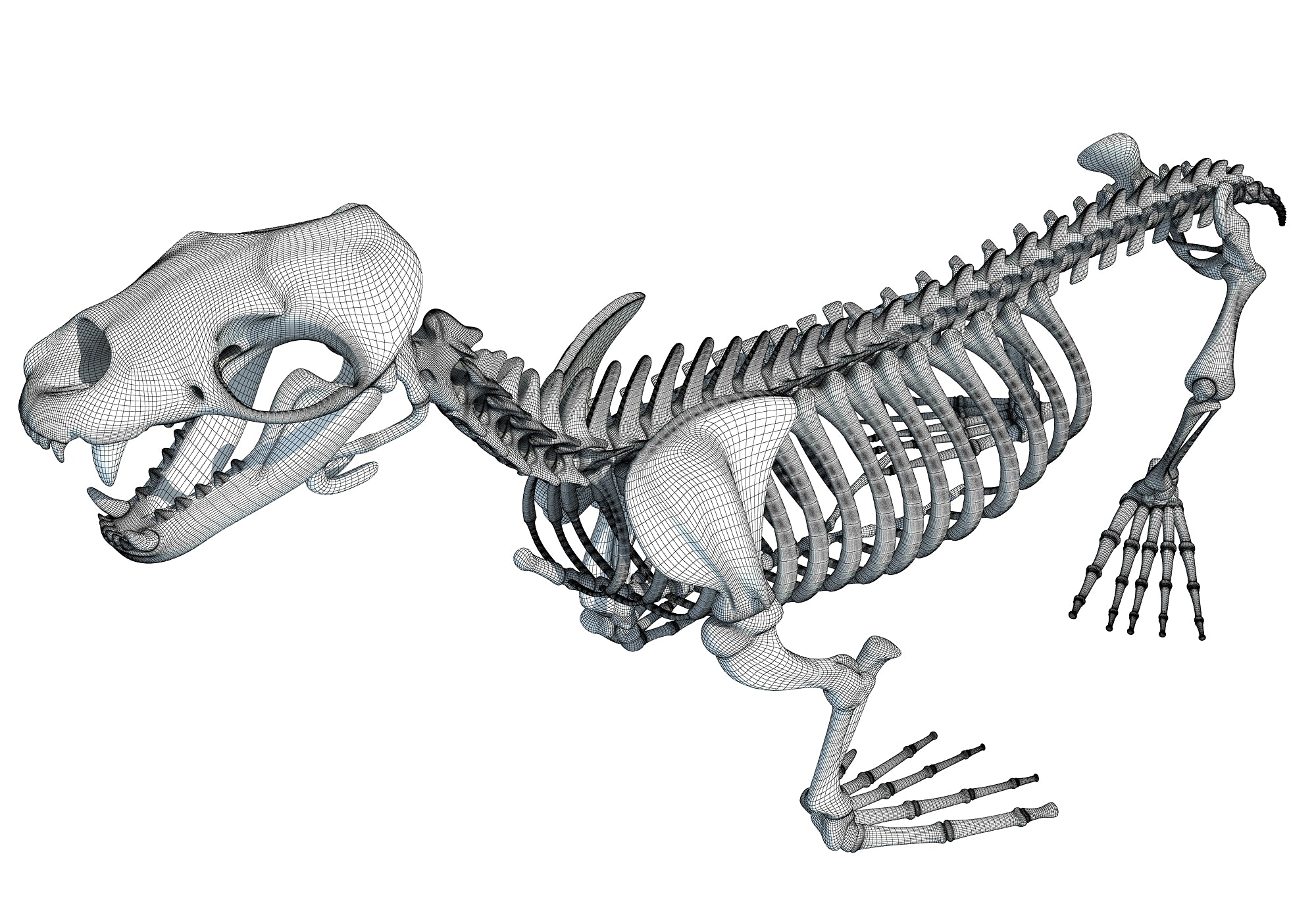Sea Lion Skeleton 3D Model