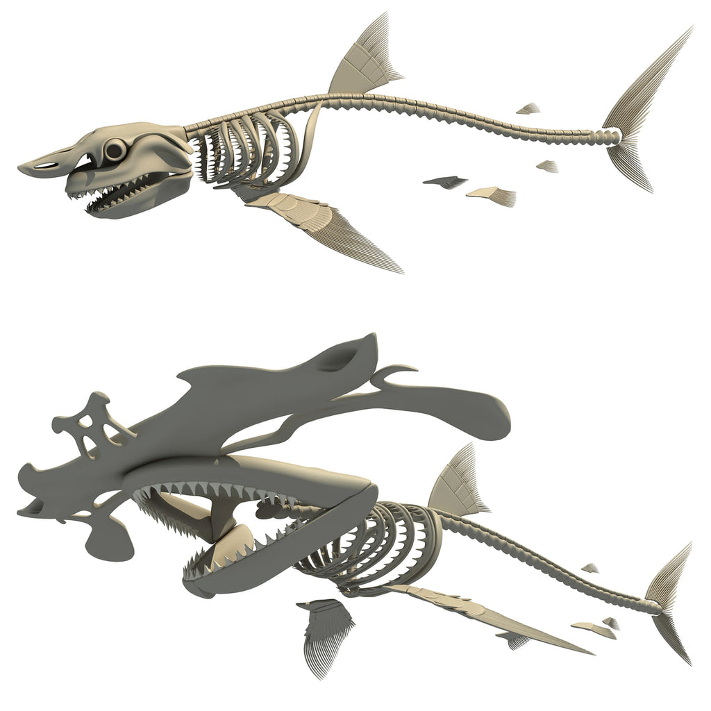 Sharks Skeletons 3D