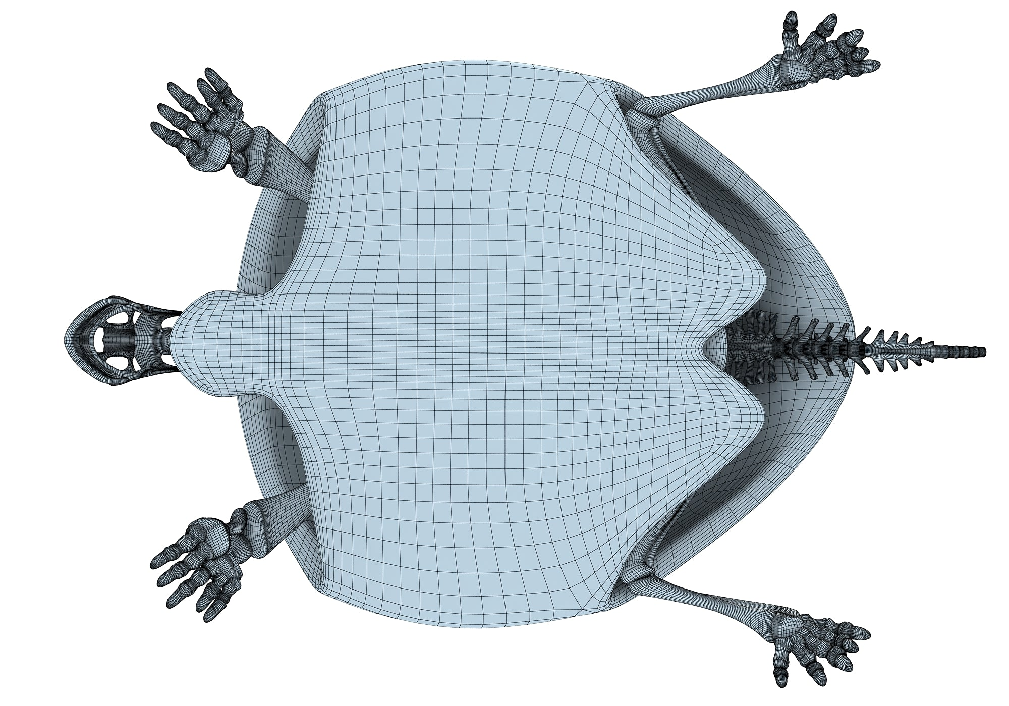 Turtle Skeleton 3D Model