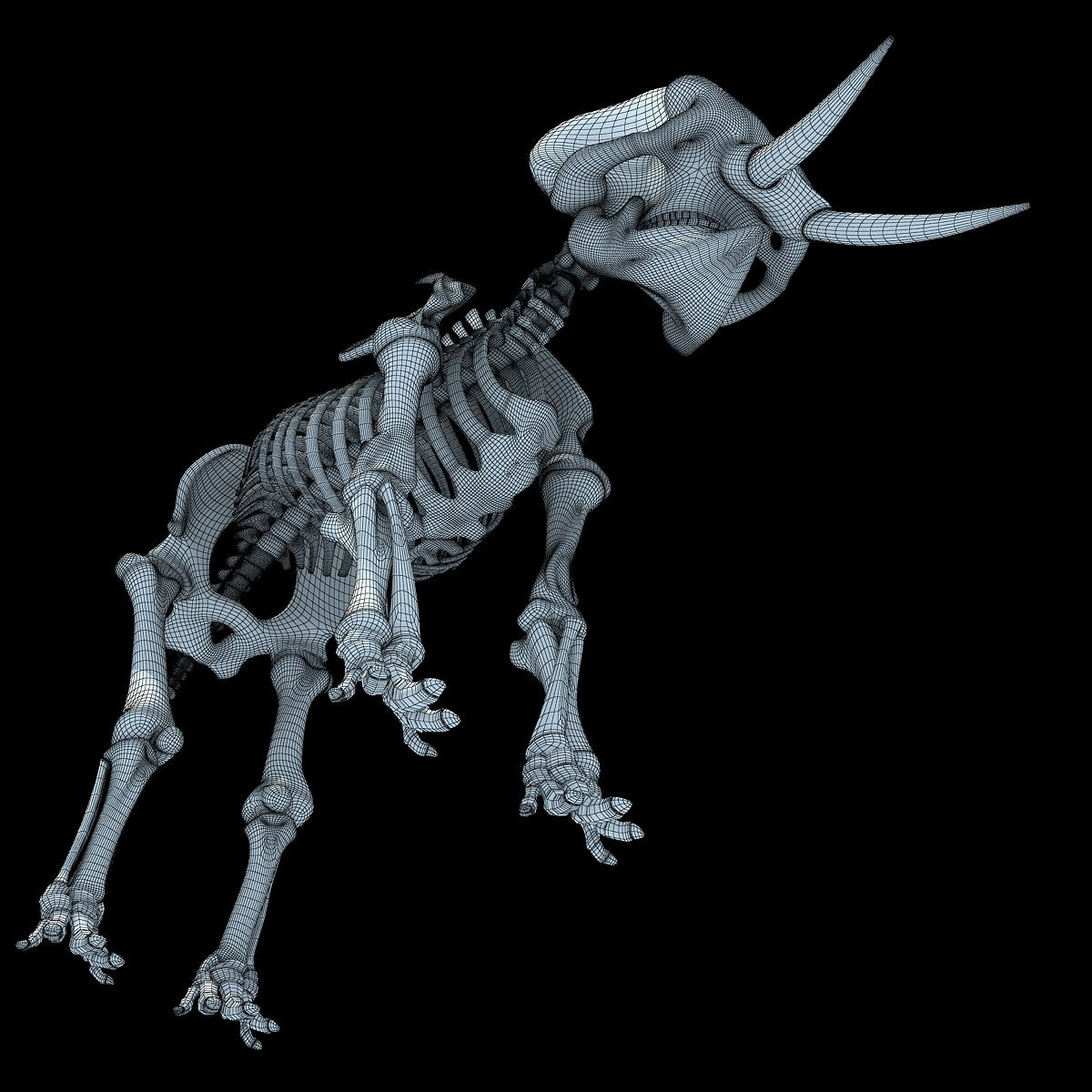 Animal Skeletons 3D Models
