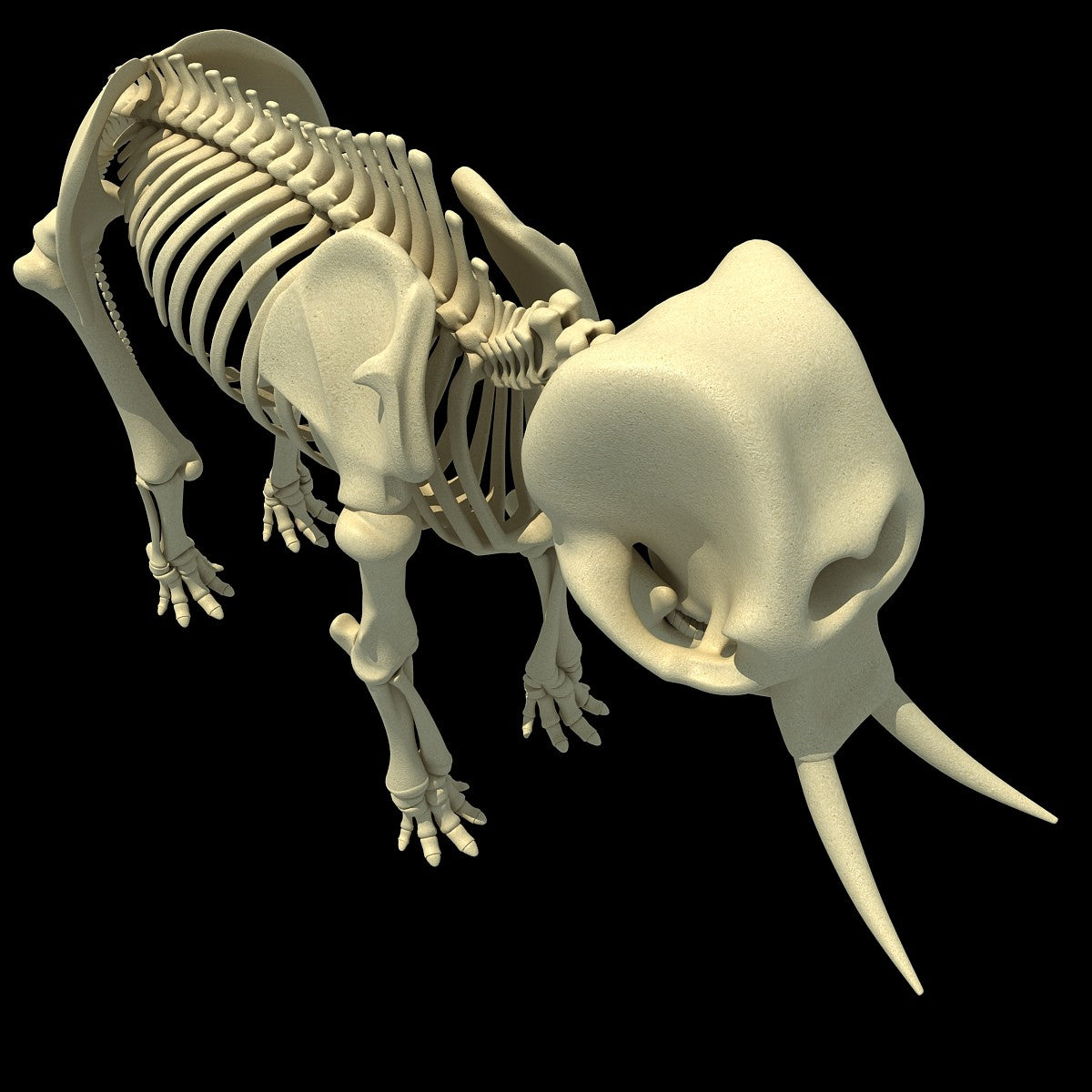 Elephant Skeleton 3D Model
