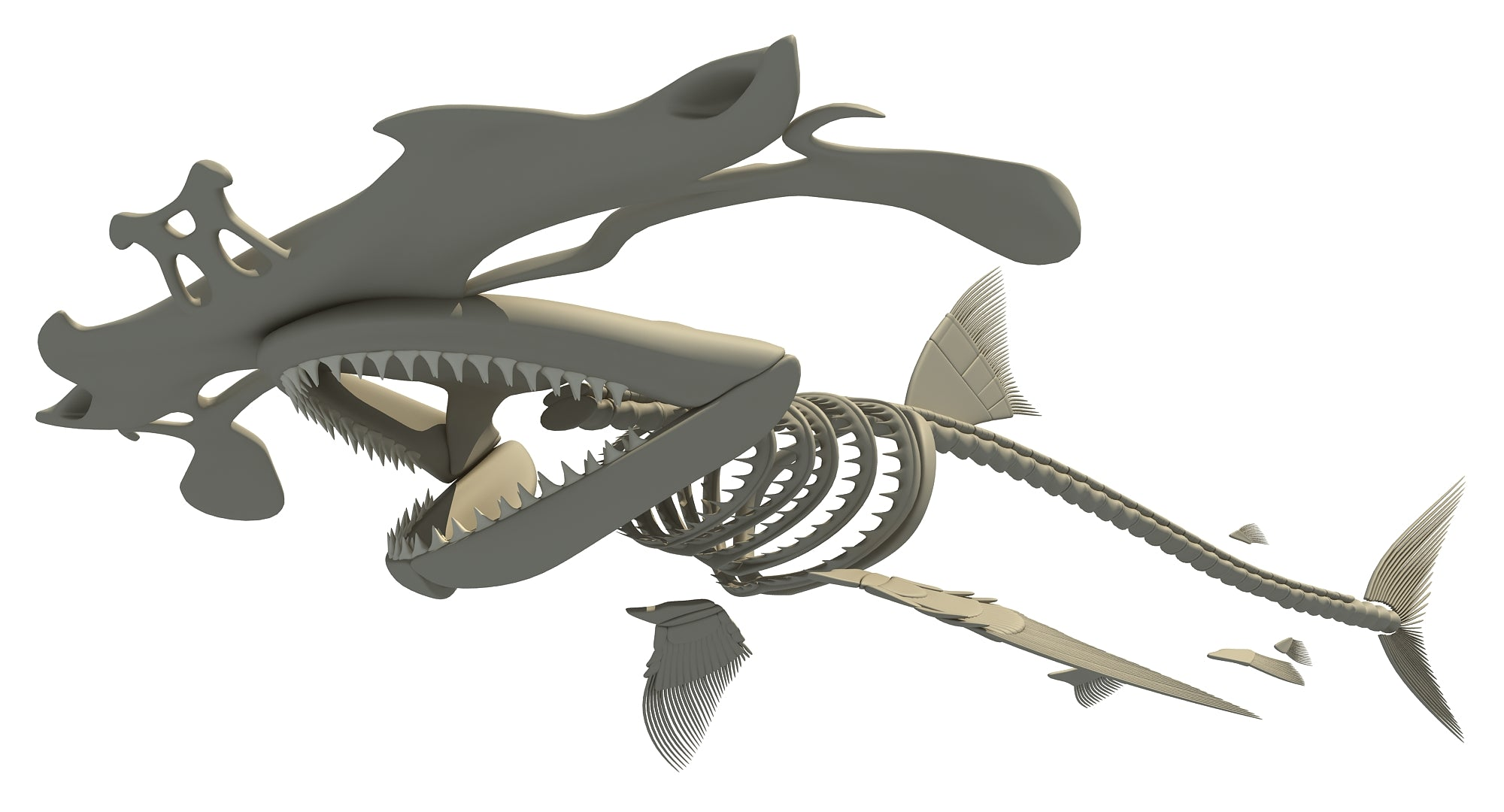 Hammerhead Shark Skeleton
