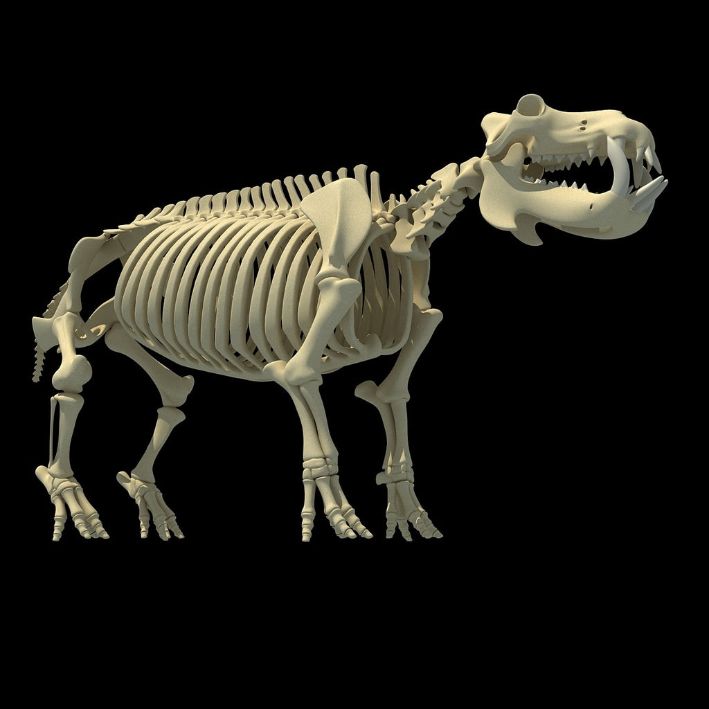 River Horse Skeleton