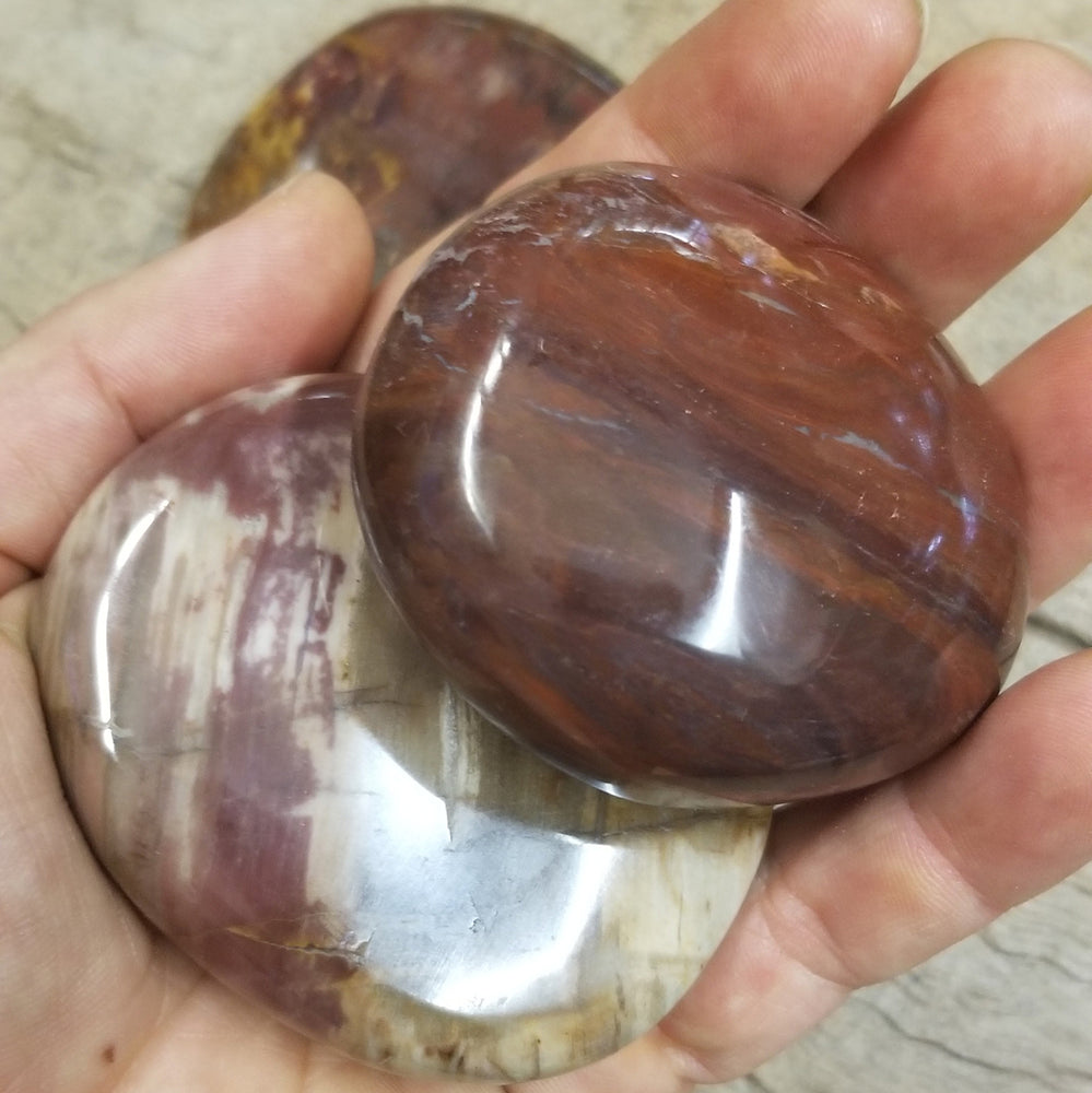 Petrified Wood, Tumbled