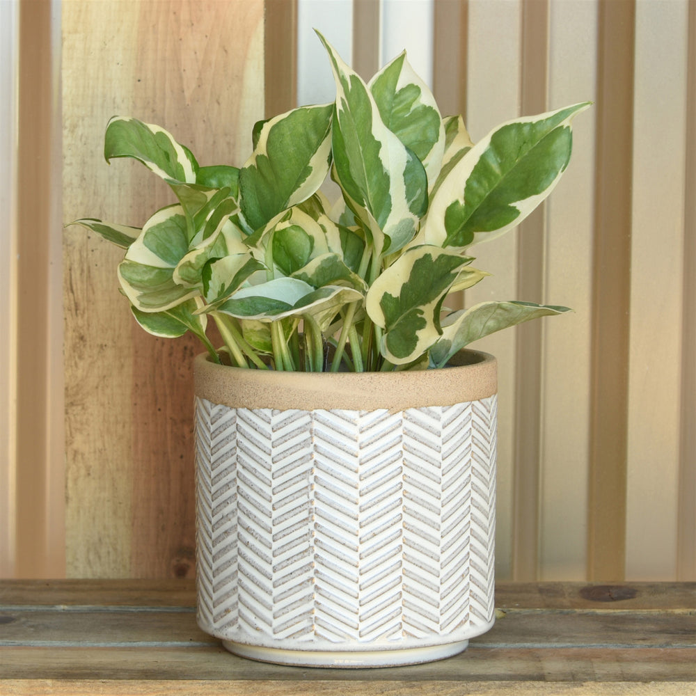 Banded Chevron Cachepot, Assorted Sizes