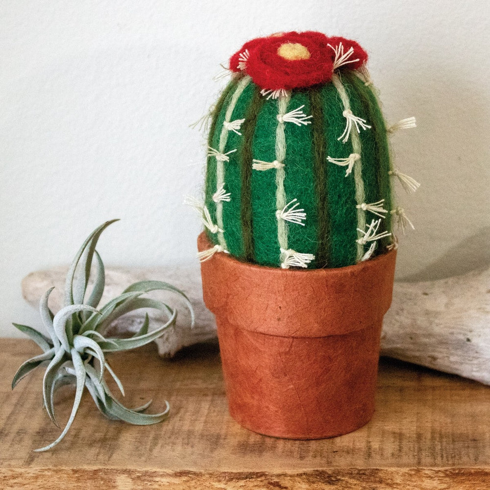 Fair Trade Barrel Cactus
